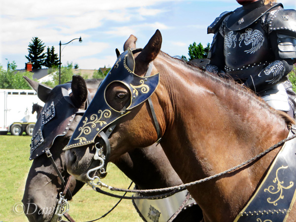 Two of the horses brought to the Military Museums in Calgary for the 'Warhorse' event on July 22, 2017.