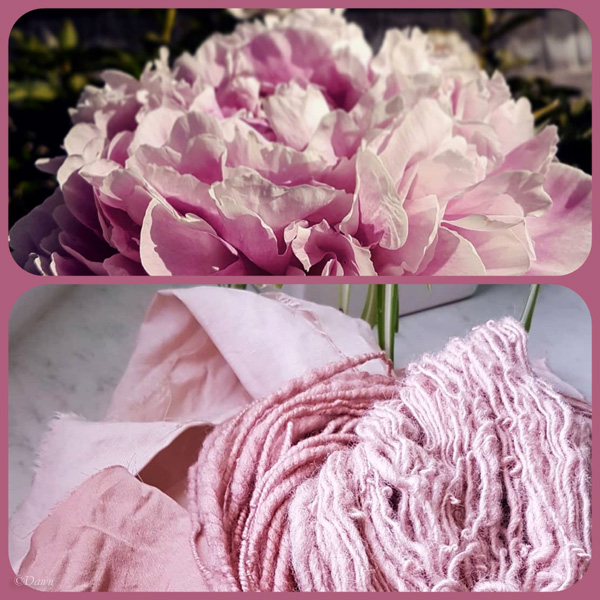 The colour of avocado dye on linen, silk, and wool is so similar to the peonies in my backyard