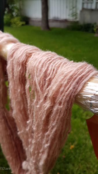 Handspun wool yarn drying in my backyard after being dyed with avocado pits and skins