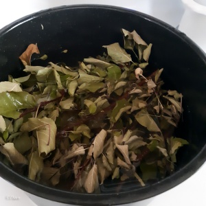 My dye pot filled with leaves and little twigs from my backyard apple tree.