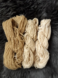 Rhubarb dyed and mordanted wool, along with untreated wool