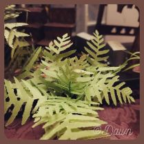 Miniature fern plants for my friend's 2020 Christmas gift